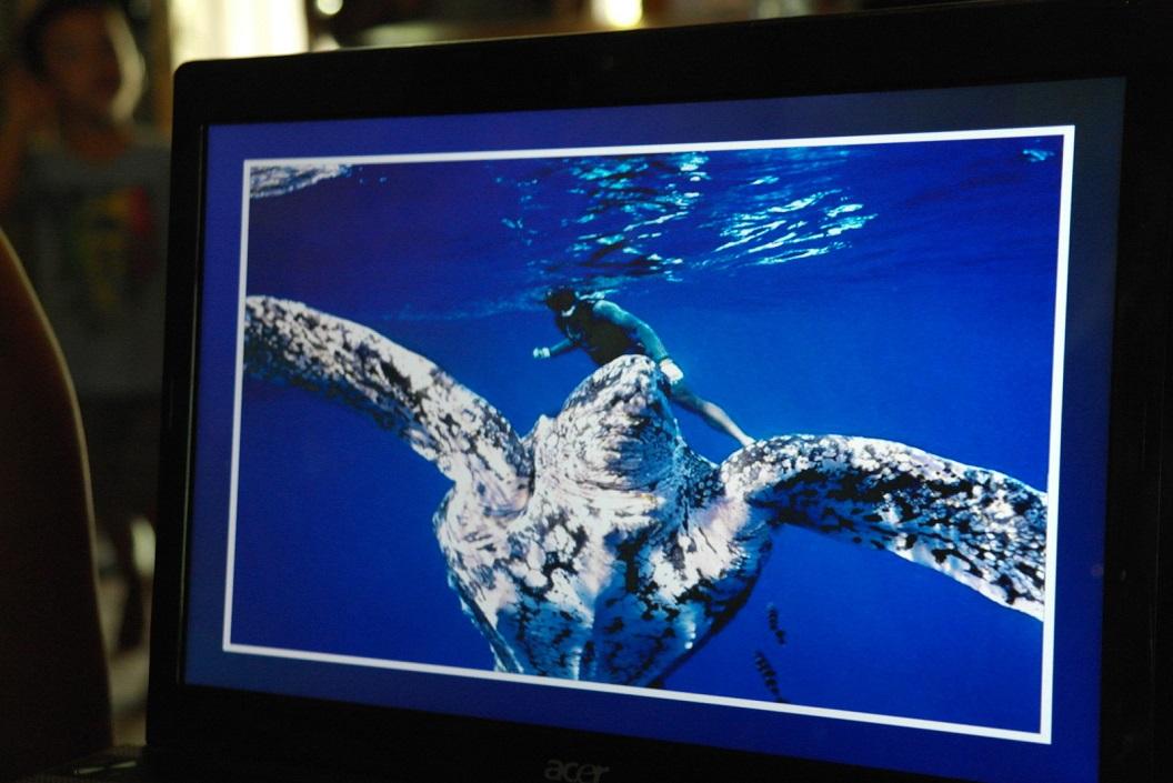 09 reusachtige Leatherbackschilpadden SAM_5122