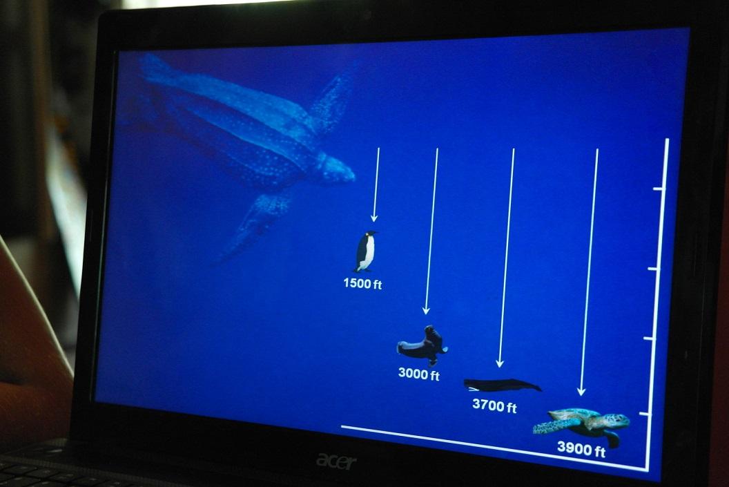 11 diepte waarop de verschillende zeedieren voortkomen SAM_5125