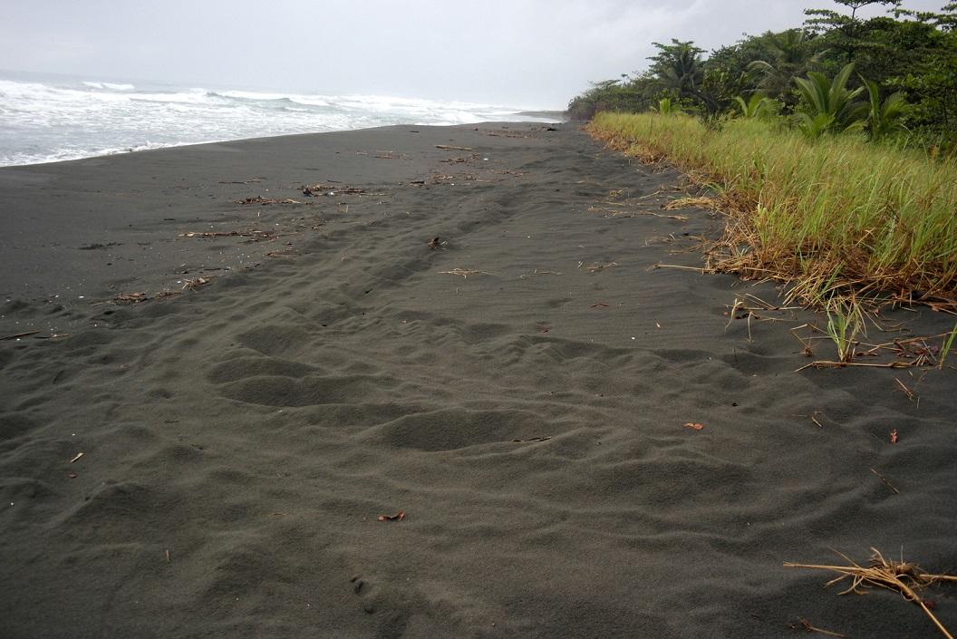36 spoor van een schildpad die zonder eieren te leggen terug gekeerd is naar zee ,SAM_5308