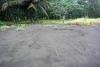 40 spoor van een schildpad die zonder eieren te leggen terug gekeerd is naar zeecSAM_5311