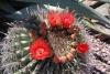 26 prachtig in bloei AM_5760