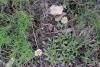 42 prachtige vegetatie SAM_6403