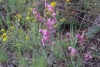 43 prachtige vegetatie SAM_6404