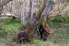 10 Elk herten op de kustroute SAM_8085