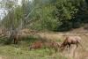 11 Elk herten op de kustroute SAM_8083