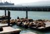 13 Pier 39 San Francisco - luieren in de zon SAM_7715