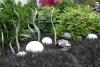 19 schitterende expositie - Garden and Glass - van Chihuly SAM_8569