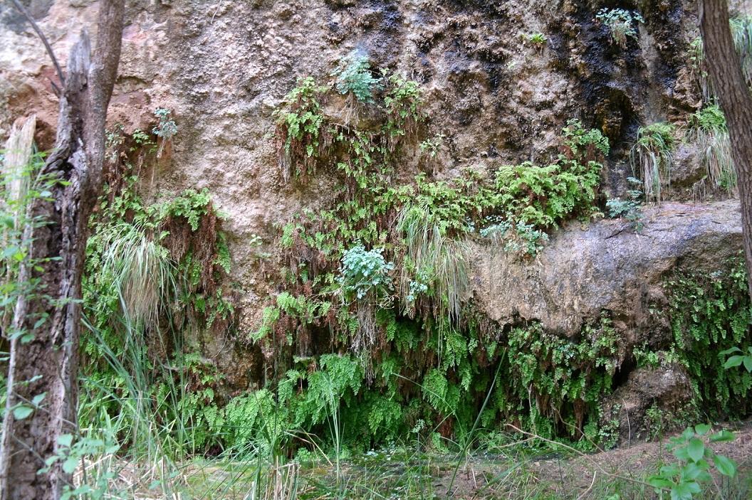 34 hanging gardens aan de rotswanden van Riverside Walk naar Temple of Sinawava SAM_6709