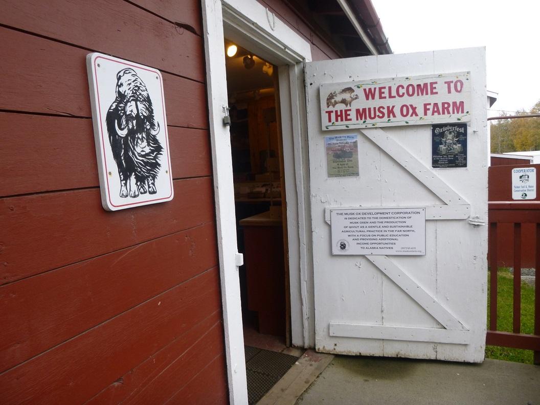 09 Musk Ox Farm - in 1954 begonnen als project voor de lokale bevolking - een bron van inkomen m.n. wolproductie - nu Alaskan non-profit corporation P1030333