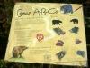 36 Bear ABC P1030527