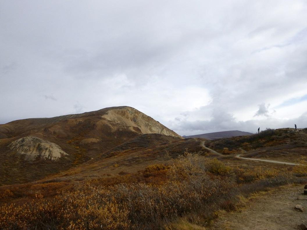 04 het Denali National Park is met name gesticht om de rijke dierenwereld in deze alpijnse taiga en toendra te beschermen P1030223