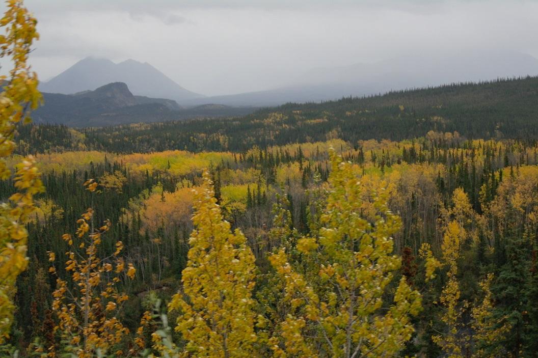 20 Herfstkleuren in Denali National Park SAM_1262