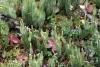 17 de meest uiteenlopende mosjes als onderbegroeiing op deze wandelroute SAM_0468