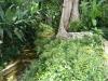 q11-prachtige-dichte-begroeiing-tijdens-wandeling-naar-boven