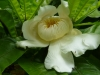 q13-een-enkele-opvallende-bloem