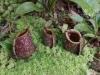 q24-de-koele-klimaat-van-penang-hill-is-ideaal-voor-het-opzetten-van-deze-exotische-tuin