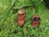 q26-sommige-varieteiten-groeien-onder-mossen