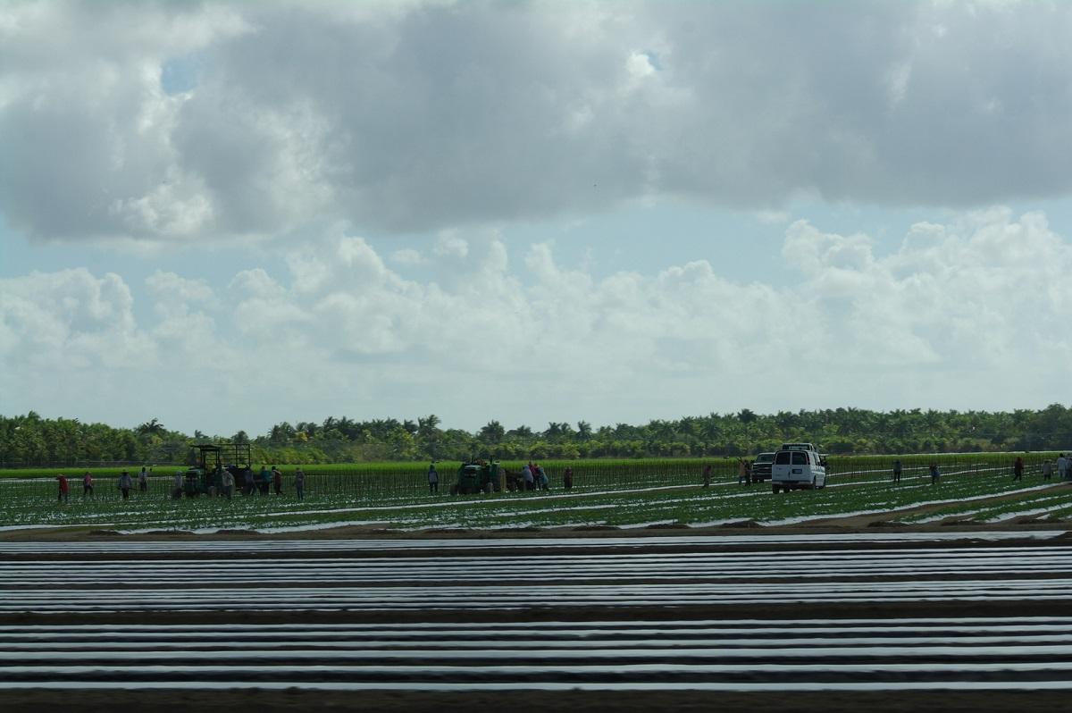 05 werknemers uit Mexico vooral betrokken bij het planten en oogsten van producten op het land