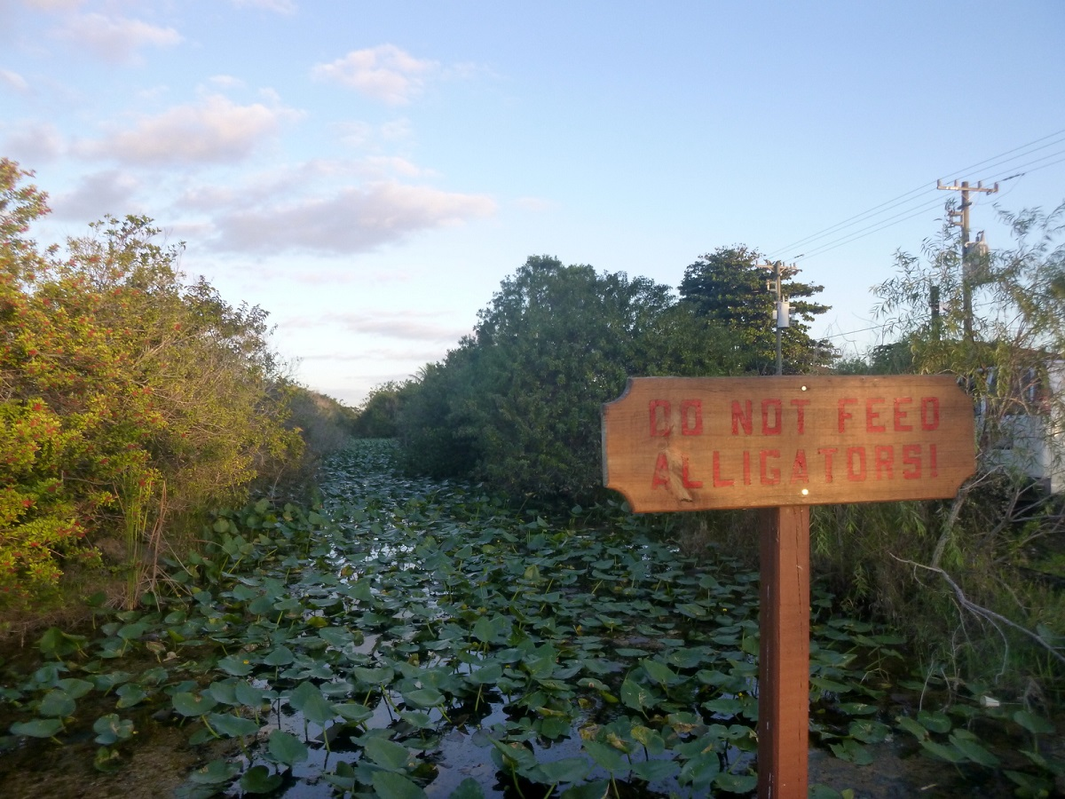 18 do not feed alligators!