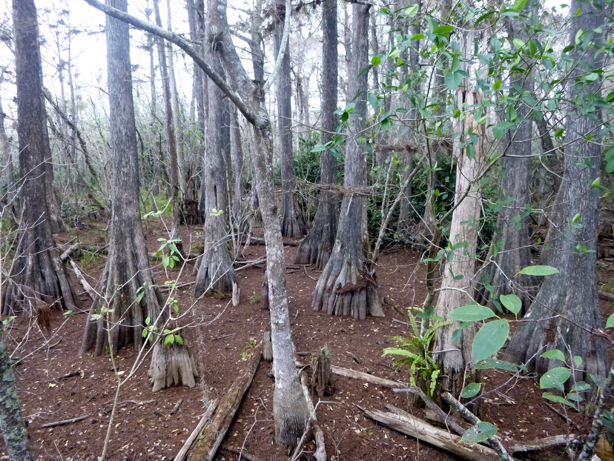 25 Cypress Swamps