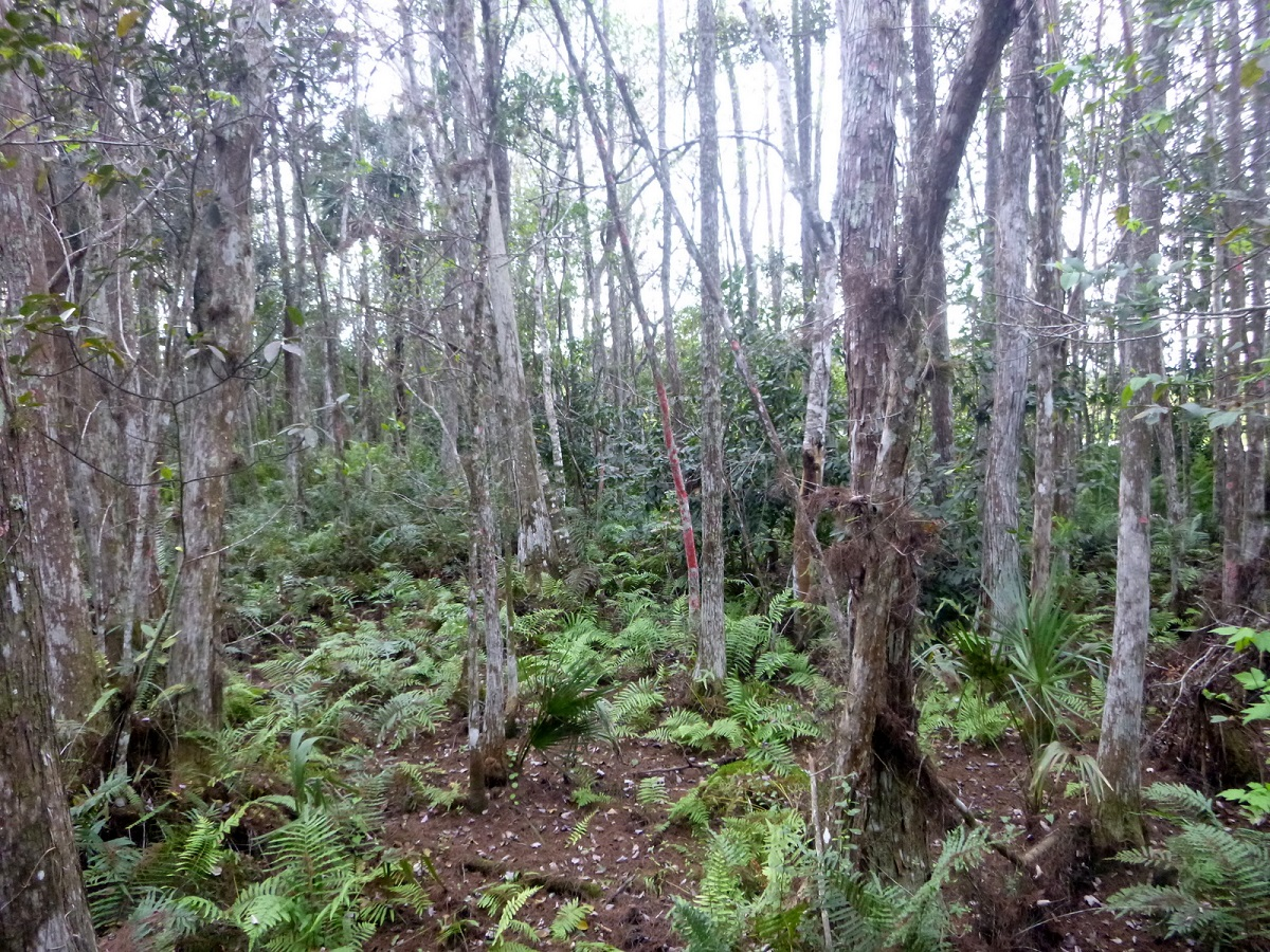 34 Cypress Swamps