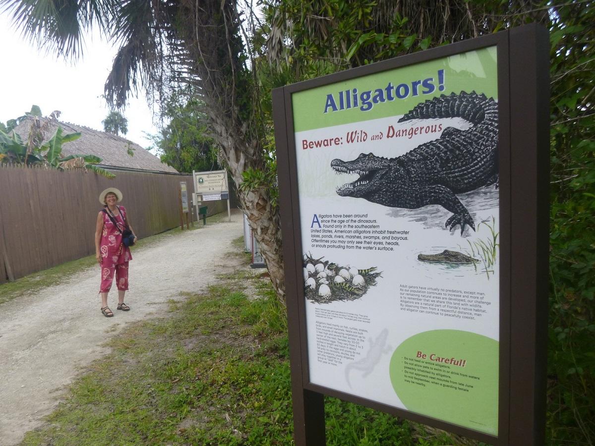 37 Alligators ! Beware