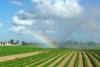 04 enorme groenten tuinen – waterbehoefte van landbouw - Agricultural and Rural Development Zones - naast het Everglades National Park