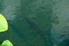 13 Florida gar – vis met bijzondere spitse snuit