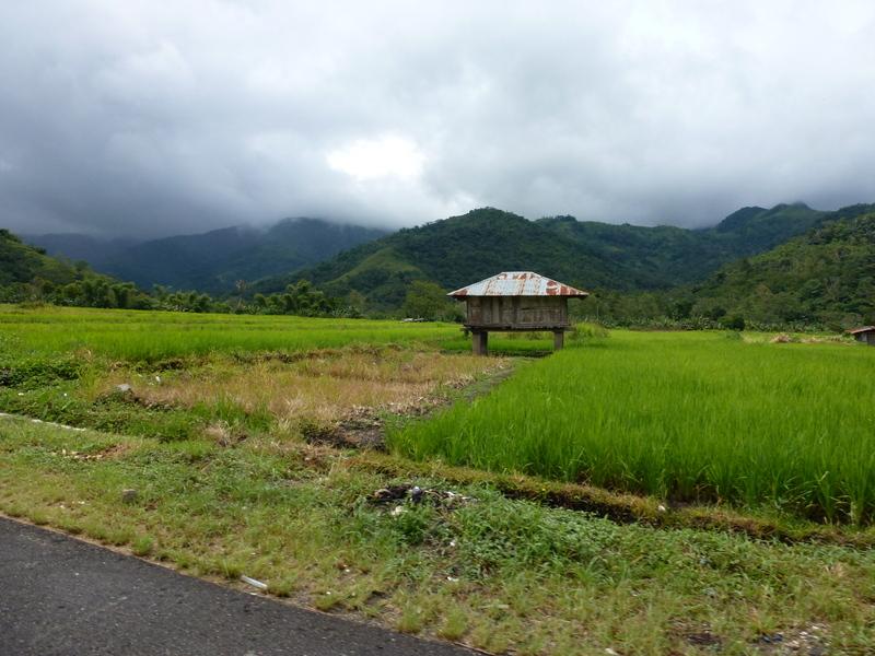 10-rijstvelden-rondom-moni