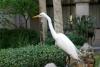 14 vogel - binnenplaats in het Lightner Museum
