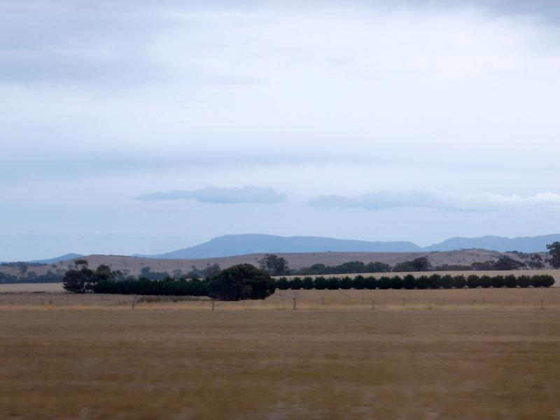 106-strakke-rijen-bomen-als-windvang-in-uitgestrekt-landschap