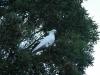 210-een-kaketoe-in-de-boom-en-101010-in-de-lucht