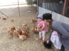 310-emma-wil-nog-even-haar-kip-knuffelen