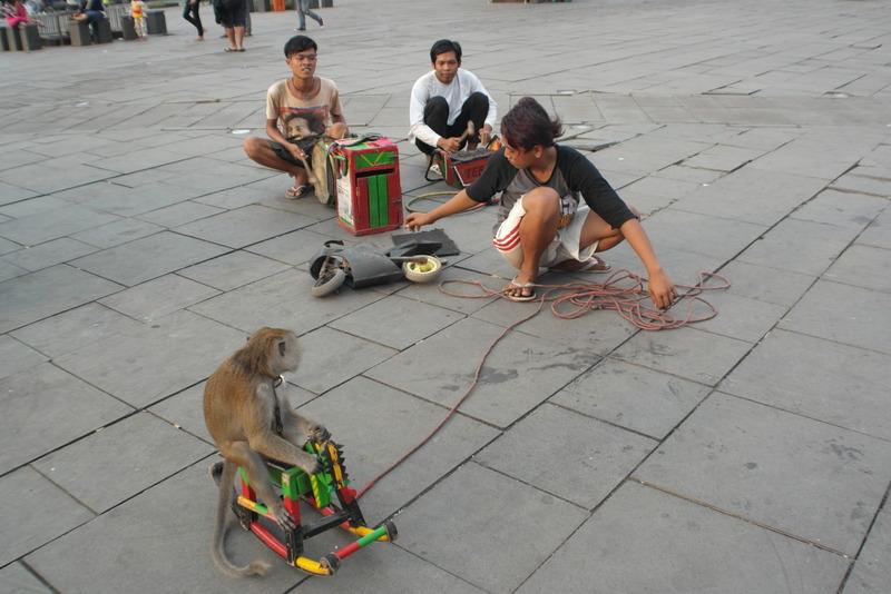 213-en-een-aap-op-een-fiets-hoe-vind-je-zoiets
