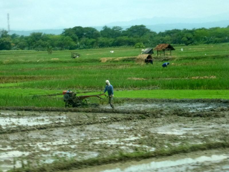 06-ploegen-en-oogsten