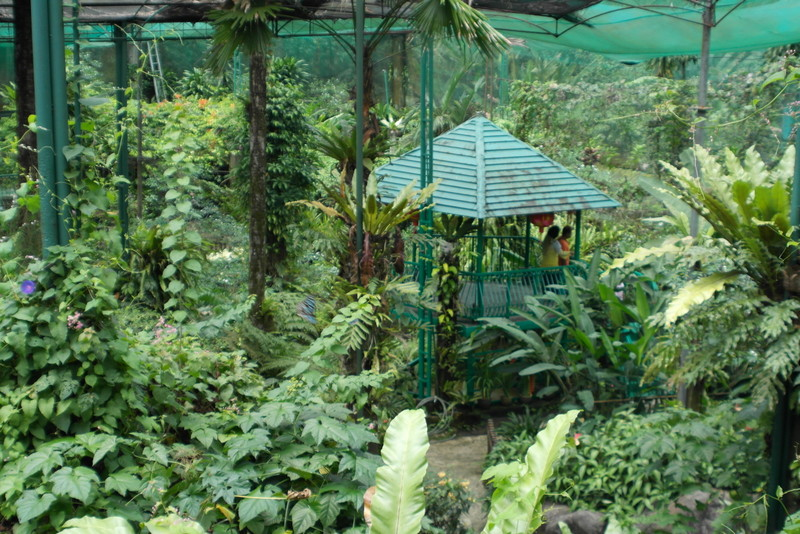 k11-kuala-lumpur-butterfly-park