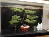 016-met-chocolaatjes-smaak-groene-thee