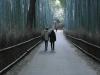 119-een-prachtige-wandeling