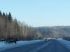 23-2012-11-29-onderweg-ijberen-te-koop