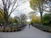 16 wandeling door Central Park met haar prachtige lanen