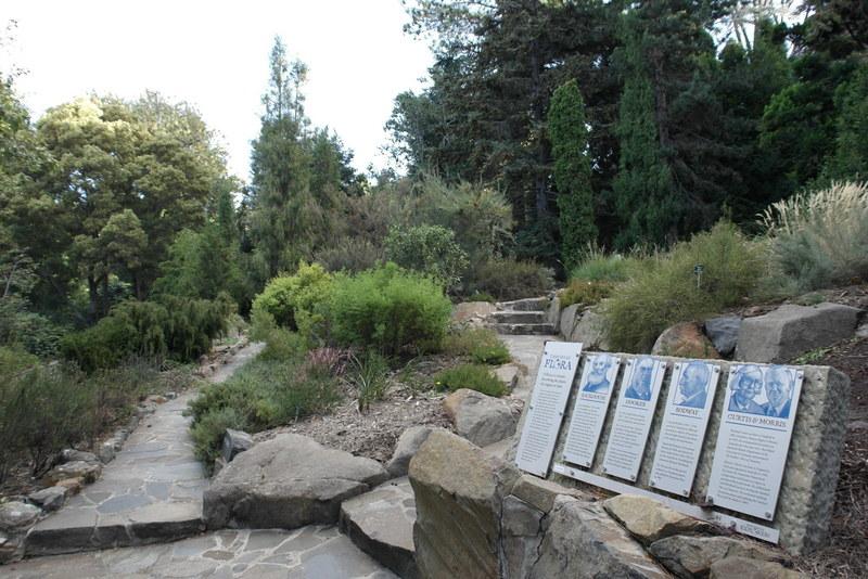 213-tasmanian-flora-garden